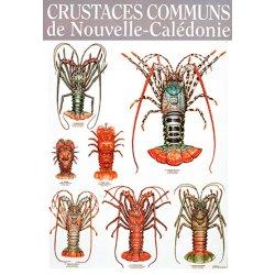 Affiche crustacés (langoustes) de NC